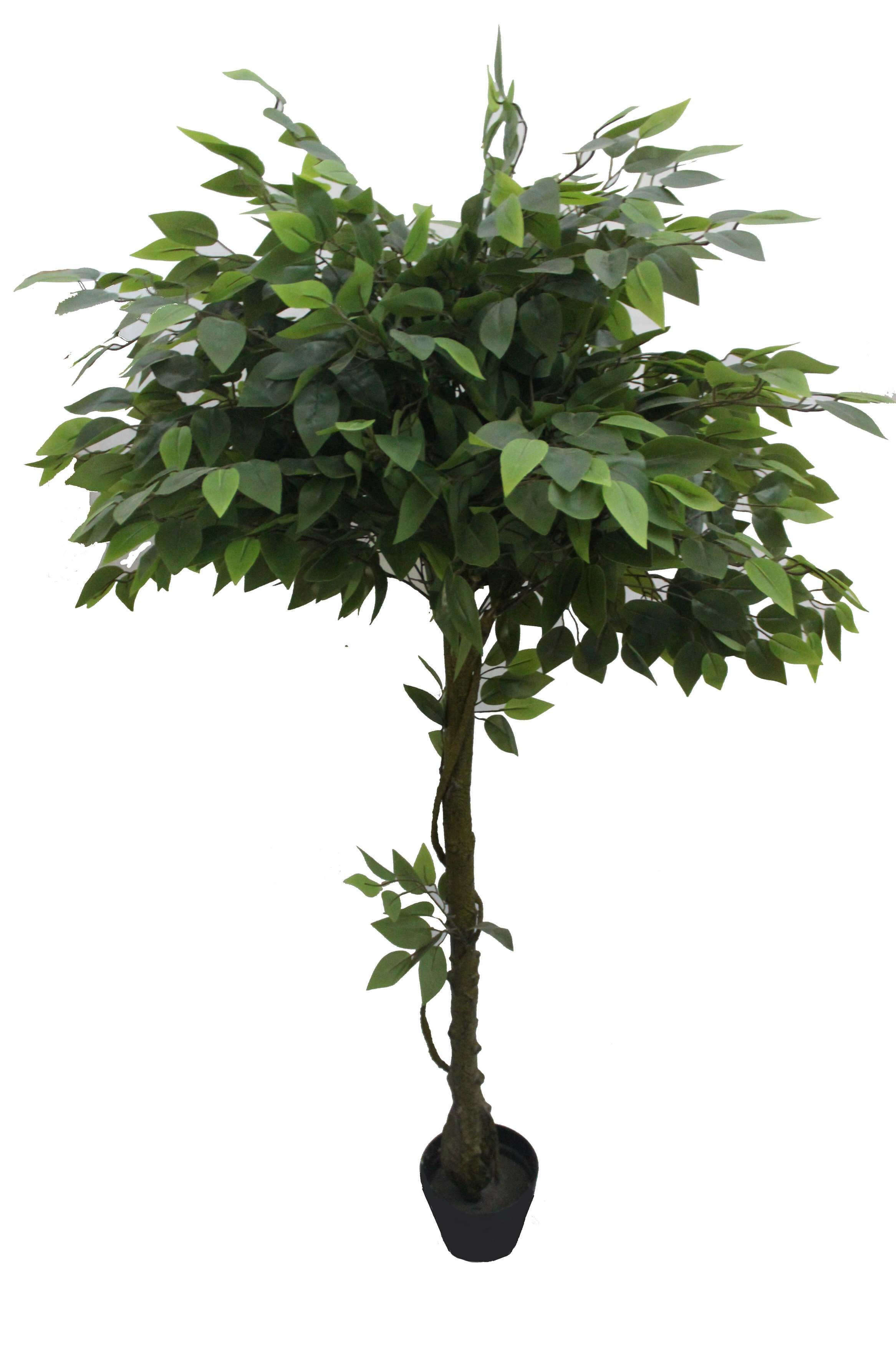 Darby Home Co Glossy Banyan Floor Ficus Tree In Pot Wayfair