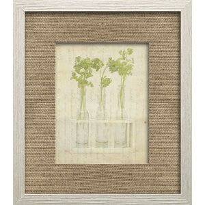 Herb Life I by Irena Orlov Framed Photographic Print by Star Creations