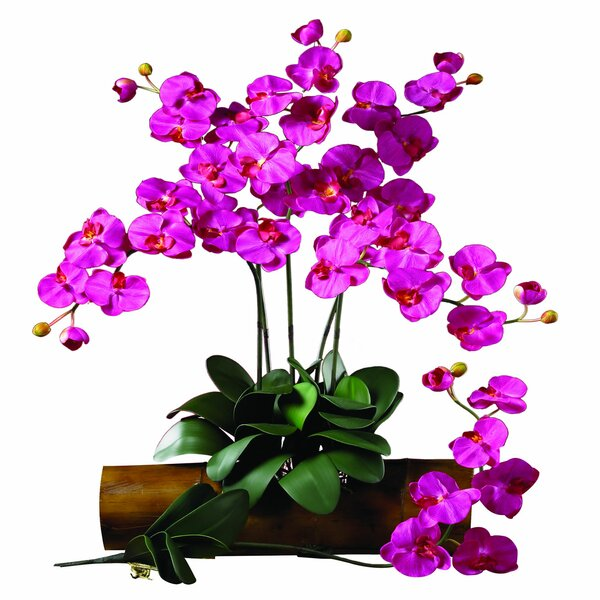 Phalaenopsis Stem (Set of 12) by Nearly Natural