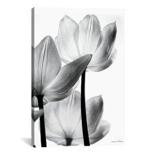 'Translucent Tulips III' Graphic Art Print by Latitude Run