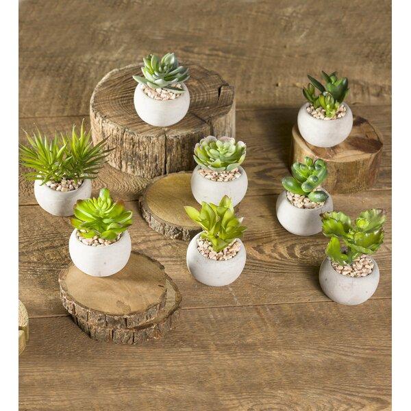 8 Piece Faux Succulent Desktop Plant in Pot Set by Wind & Weather