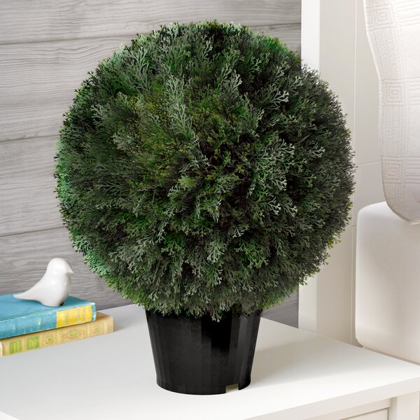 Ball Cedar Topiary in Pot by Three Posts