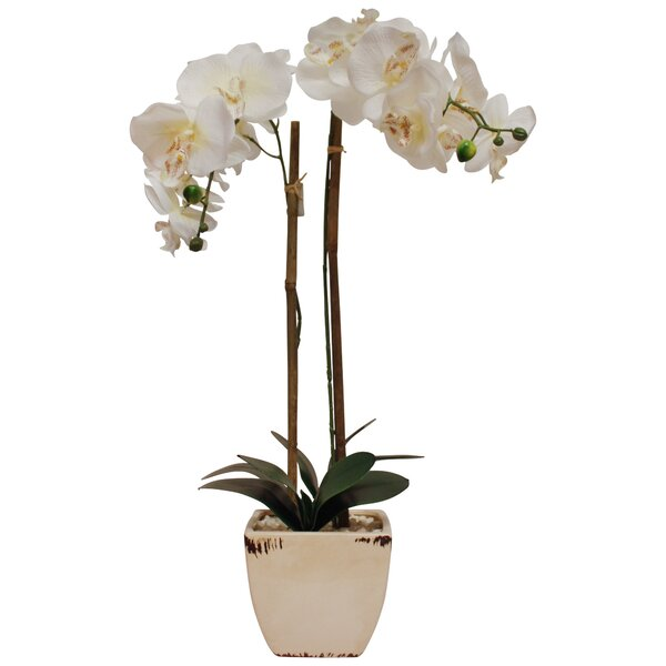 Faux Phalaenopsis Orchid Floral Arrangement in Pot by House of Hampton