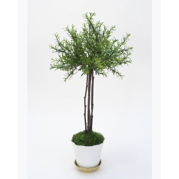Small Thyme Floor Foliage Topiary in Pot by Charlton Home