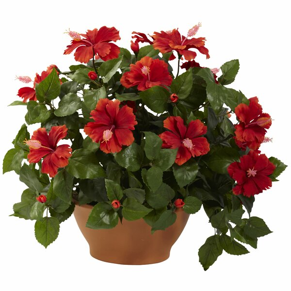 Hibiscus Desk Top Plant in Planter by Alcott Hill