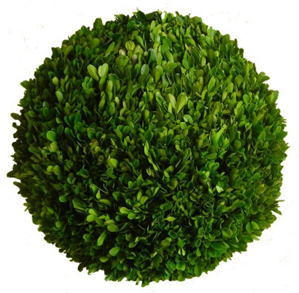 Boxwood 8 Ball (Set of 2) by Mills Floral