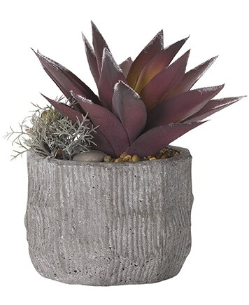 Frosted Aloe Floor Succulent Plant in Planter by Bungalow Rose