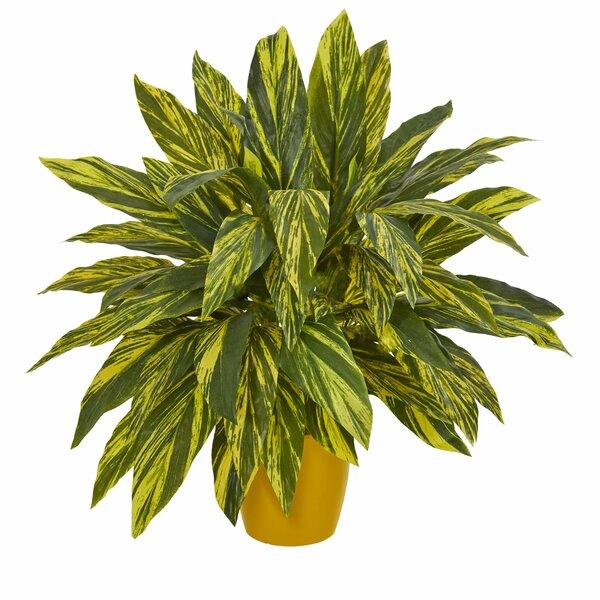 Tradescantia Floor Foliage Plant in Planter by Winston Porter
