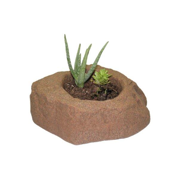 Wickes 1 Piece Plastic Pot Planter by Ebern Designs