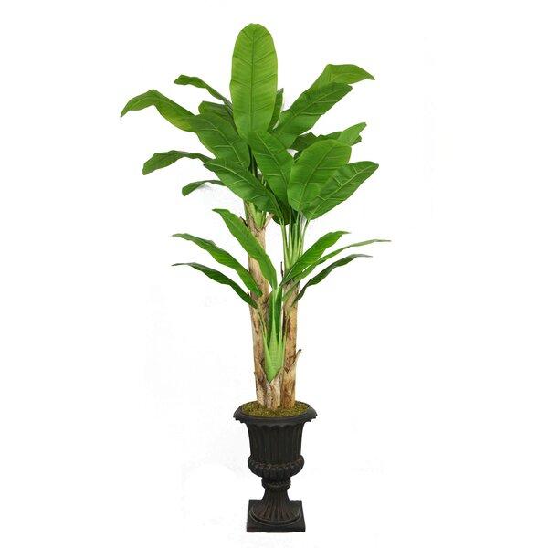 Tall Banana Leaf Tree in Urn by Bayou Breeze