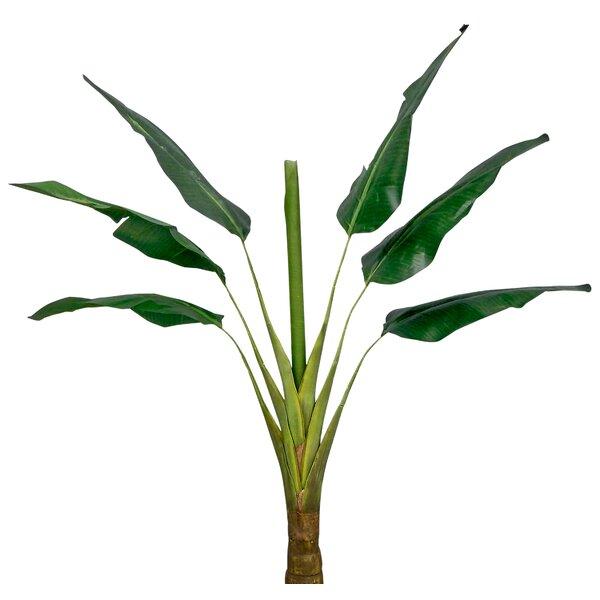 60 Traveler Floor Palm Tree by Bay Isle Home
