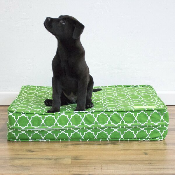 Sereno Green 5 Thick Soft/Firm Reversible Comfort Gel Memory Foam Orthopedic Dog Bed by Tucker Murphy Pet