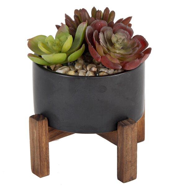 Desktop Succulent Plant in Pot by Bungalow Rose
