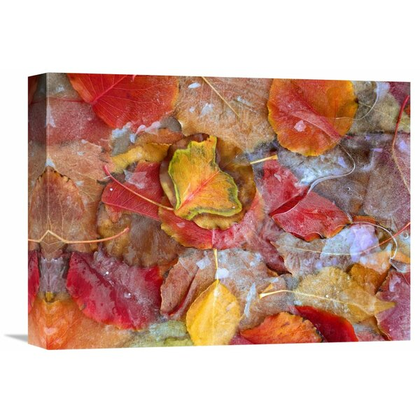 Nature Photographs Cottonwood Frozen Leaves, North America by Tim Fitzharris Photographic Print on Wrapped Canvas by Global Gallery