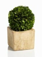 Carina Preserved Boxwood Topiary in Pot by Zodax