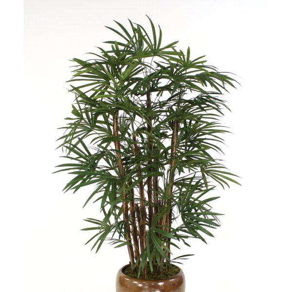 Lady Palm Tree in Urn by Distinctive Designs