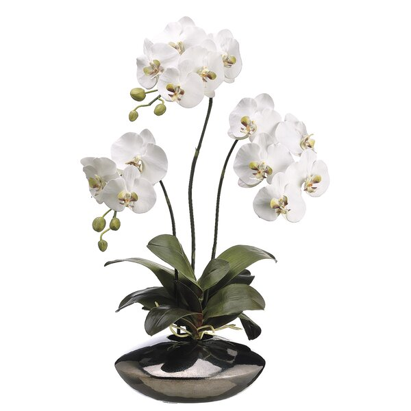Phalaenopsis Orchid Plant in Ceramic Pot by Tori Home