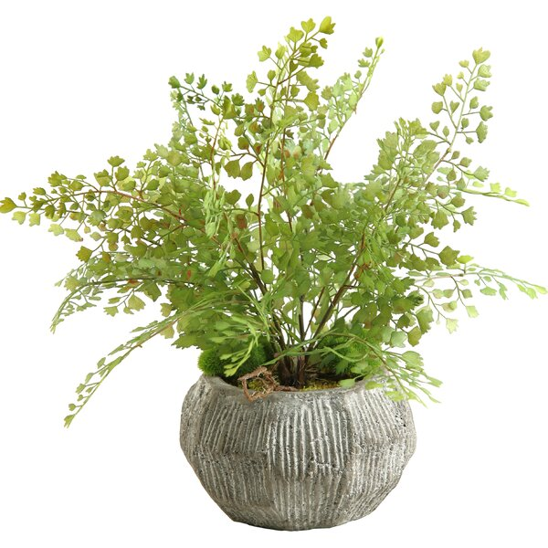 Fla Iron Foliage Plant in Pot by D & W Silks
