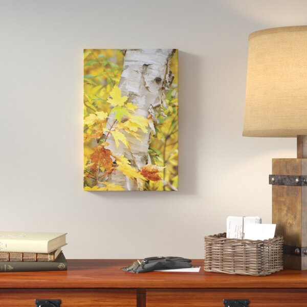 Birch Peels Photographic Print on Wrapped Canvas by Loon Peak