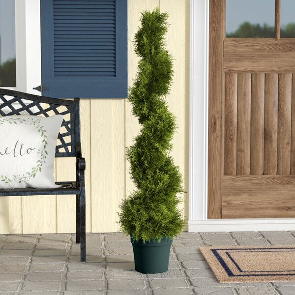 Slim Spiral Round Topiary in Pot by Alcott Hill