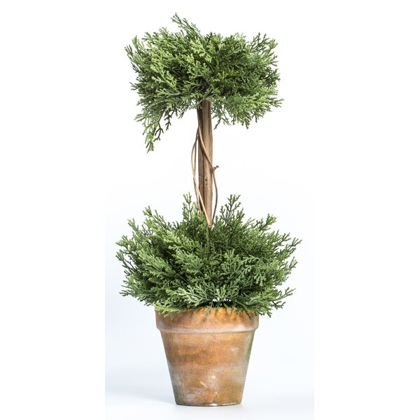 Double Untrimmed Flowering Topiary in Pot by Ragon House Collection