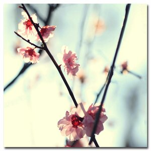 My Spring by Beata Czyzowska Young Photographic Print on Wrapped Canvas by Trademark Fine Art