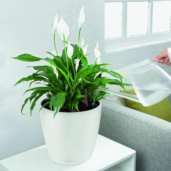 Classico Self-Watering Plastic Pot Planter by Lechuza