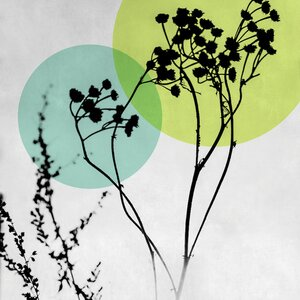 'Abstract Flowers II' Graphic Art Print on Canvas by East Urban Home
