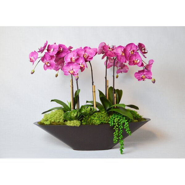 Orchid in Metal Boat by Greyleigh