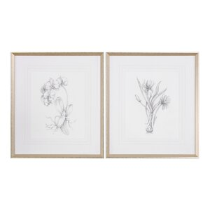 Botanical Sketches 2 Piece Framed Painting Print Set by Darby Home Co
