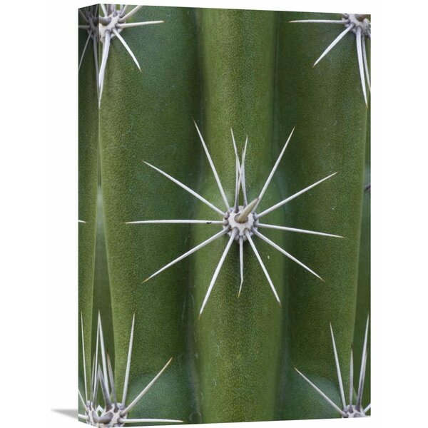 Nature Photographs Cactus Spines, Saguaro National Park, Arizona by Ingo Arndt Photographic Print on Wrapped Canvas by Global Gallery