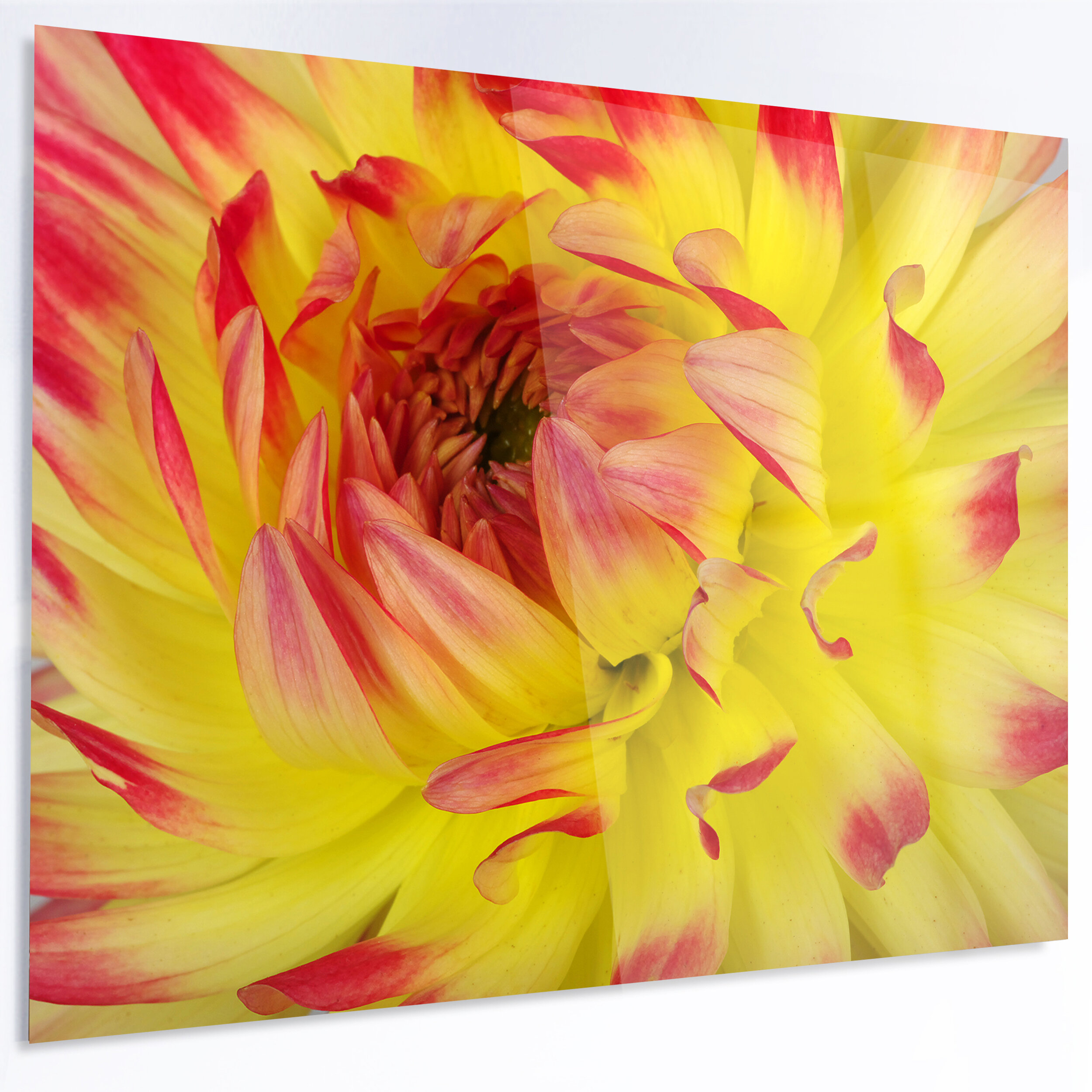 DesignArt \'Smooth Yellow Red Flower Petals\' Photographic Print on ...