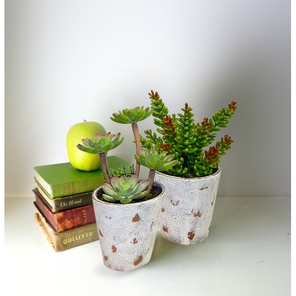 2 Piece Potted Succulent Plant in Pot Set by Zipcode Design