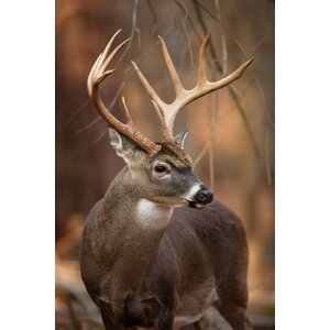 Big Buck Photographic Print on Canvas by TrekDecor