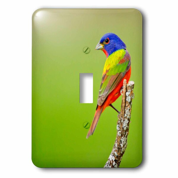 Passerina Ciris Male Perched 1-Gang Toggle Light Switch Wall Plate by 3dRose