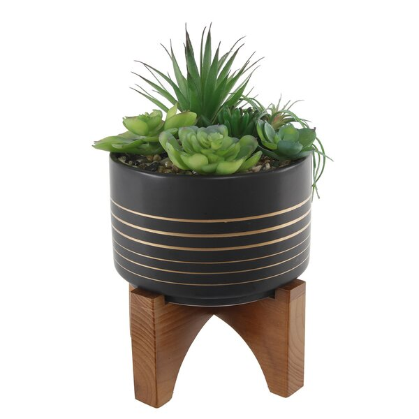 Desktop Succulent Plant in Pot by Bloomsbury Marke