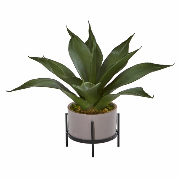 Agave Desktop Succulent Plant in Planter by Brayden Studio