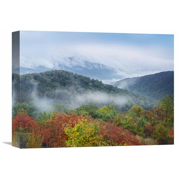 Nature Photographs Broadleaf Forest In Fall Colors, Skyline Drive, Shenandoah National Park, Virginia by Tim Fitzharris Photographic Print on Wrapped Canvas by Global Gallery