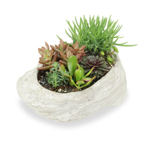 Reba Rock Concrete Pot Planter by Bloomsbury Market