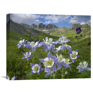 Nature Photographs Colorado Blue Columbine Meadow at American Basin, Colorado by Tim Fitzharris Photographic Print on... by Global Gallery