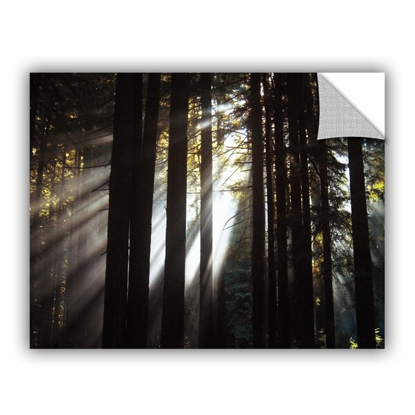 Sunlight Through The Woods Photographic Print on Canvas by Loon Peak