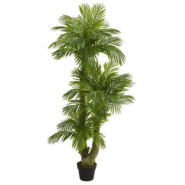 Triple Phoenix Floor Palm Tree in Planter by Bay Isle Home