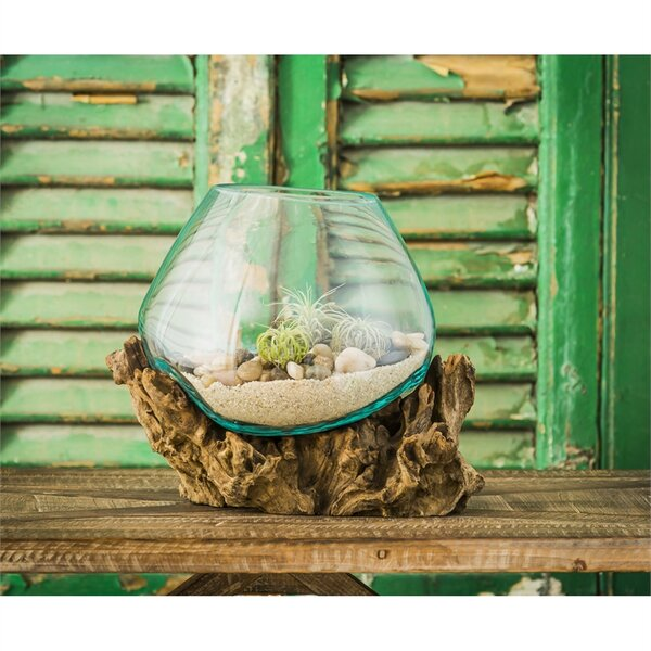 Glass Terrarium by Evergreen Enterprises, Inc