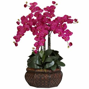 Large Phalaenopsis Silk Flower Arrangement in Beauty