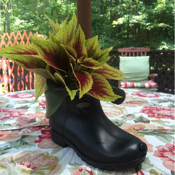 Boot Buddies Cody Pot Planter by HomeStyles