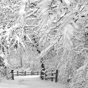 Winter Wonderland Photographic Print by Prestige Art Studios