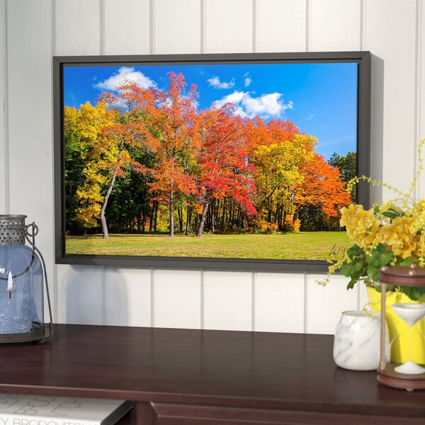 Fall Trees Framed Photographic Print by Winston Porter