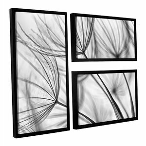 'Parachute Seed I' by Cora Niele 3 Piece Framed Photographic Print on Canvas Set by ArtWall