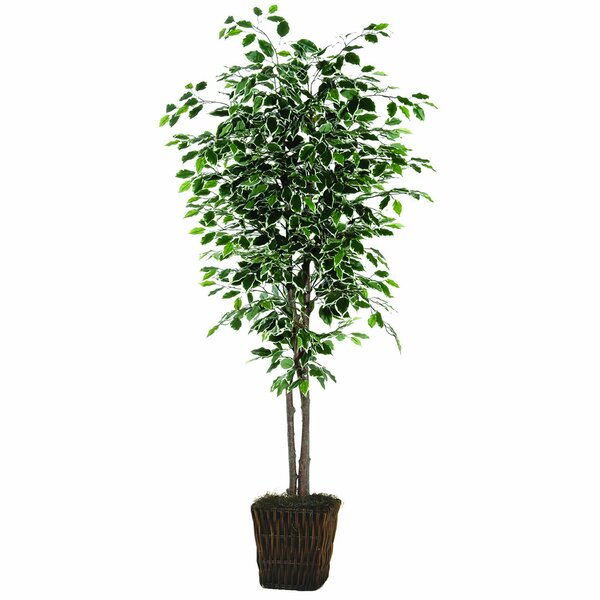 Floor Ficus Tree in Planter by Three Posts