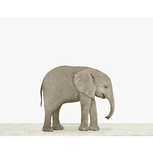 Baby Animals 'Baby Elephant' by Sharon Montrose Photographic Print by The Animal Print Shop by Sharon Montrose